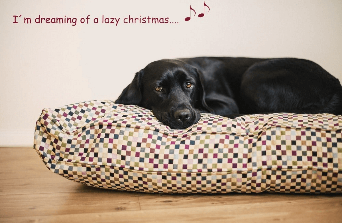 I´m dreaming of a lazy christmas…. | DOGS in the CITY