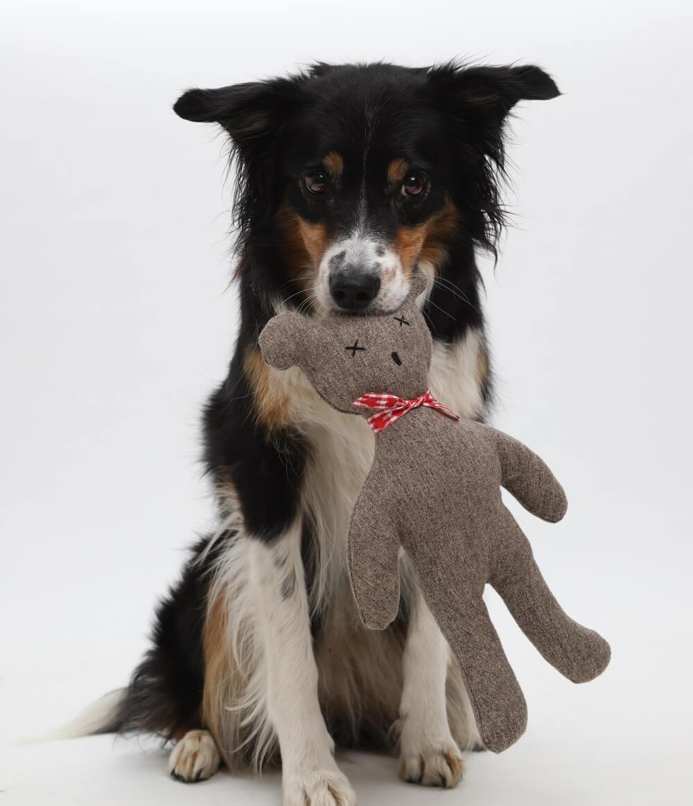 DANKE SCHÖÖÖÖN! THANK YOOOUUUU! | DOGS in the CITY