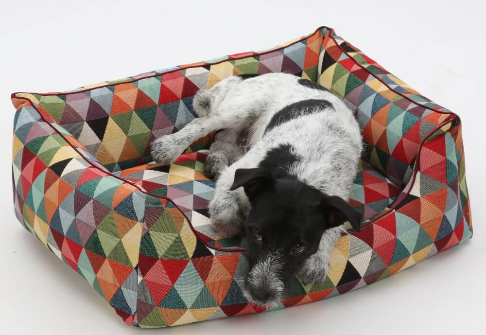 Nope! I definitely do not get up from my brand new box bed Harlekin...! | DOGS in the CITY