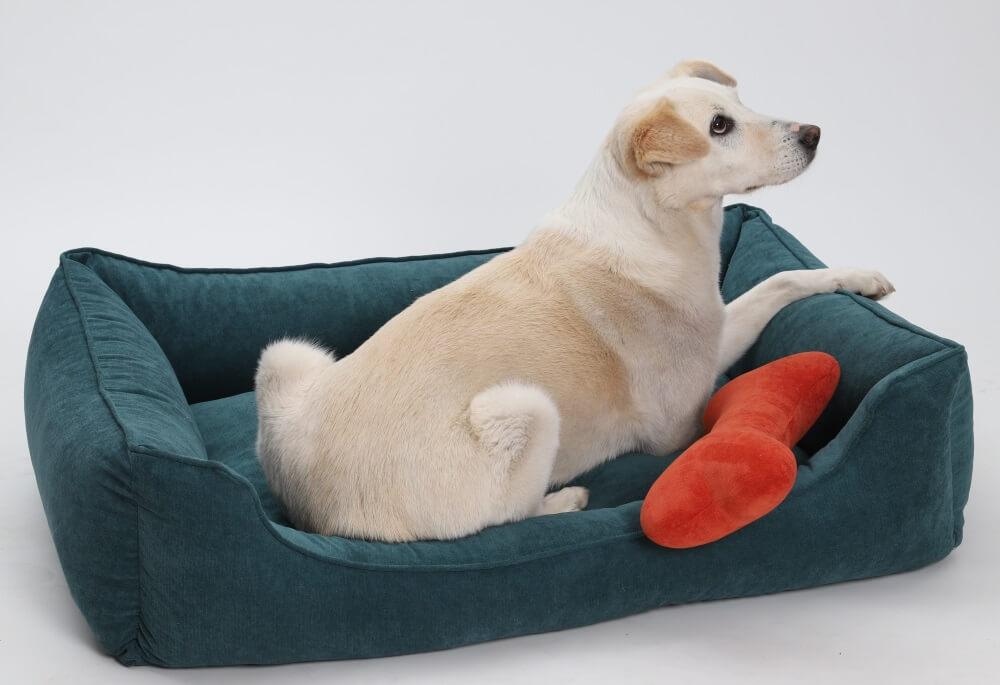 Ein schöner Rücken kann auch entzücken...A beautiful back can also delight... | DOGS in the CITY