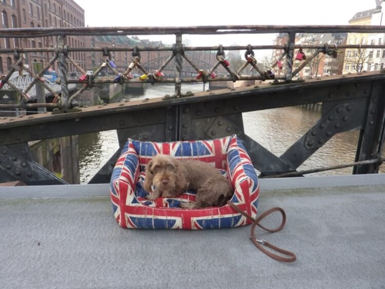 I never go out without my box bed Union Jack, seriously… ;-) | BEHIND THE SCENES