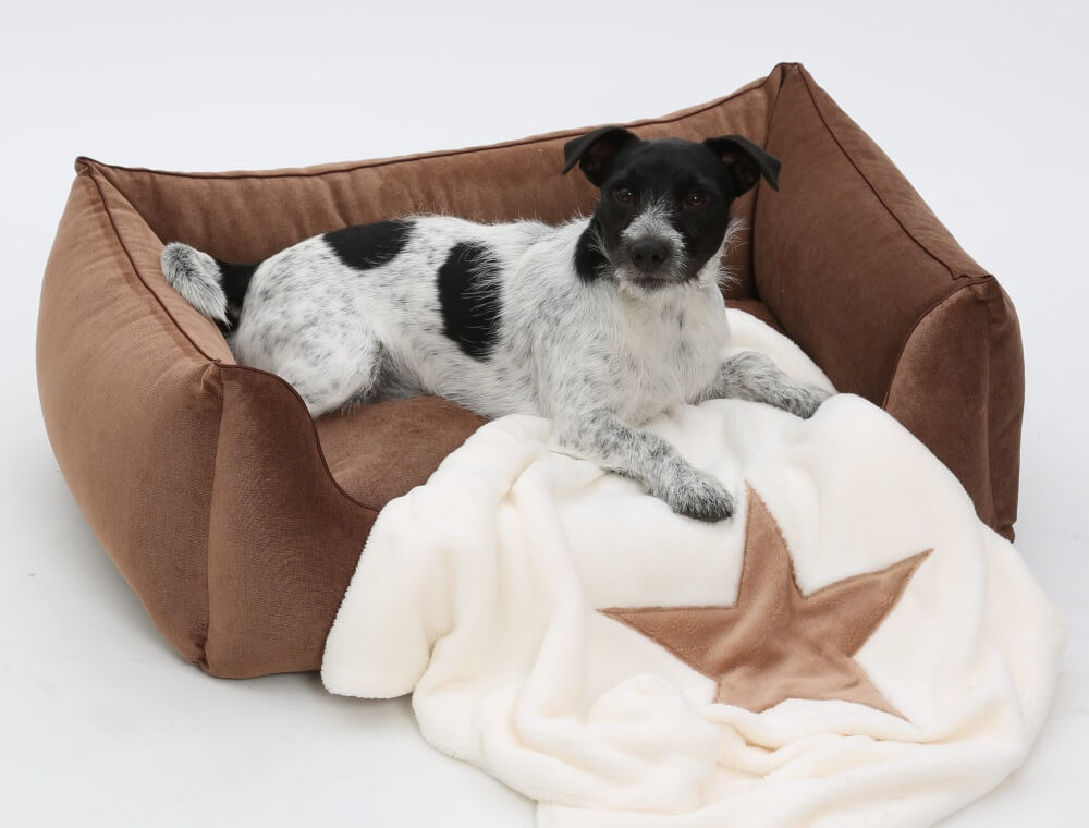 My new cuddly bed reminds me of autumn leaves...tssstsss... | DOGS in the CITY