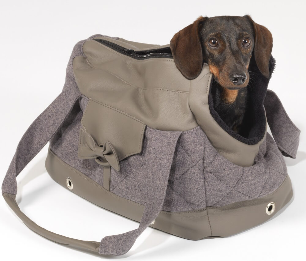 I'm all ready to go - and you? | DOGS in the CITY