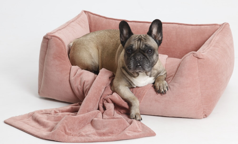 Guess what my favorite color is...? ;-) Pink greetings from Helga... | DOGS in the CITY