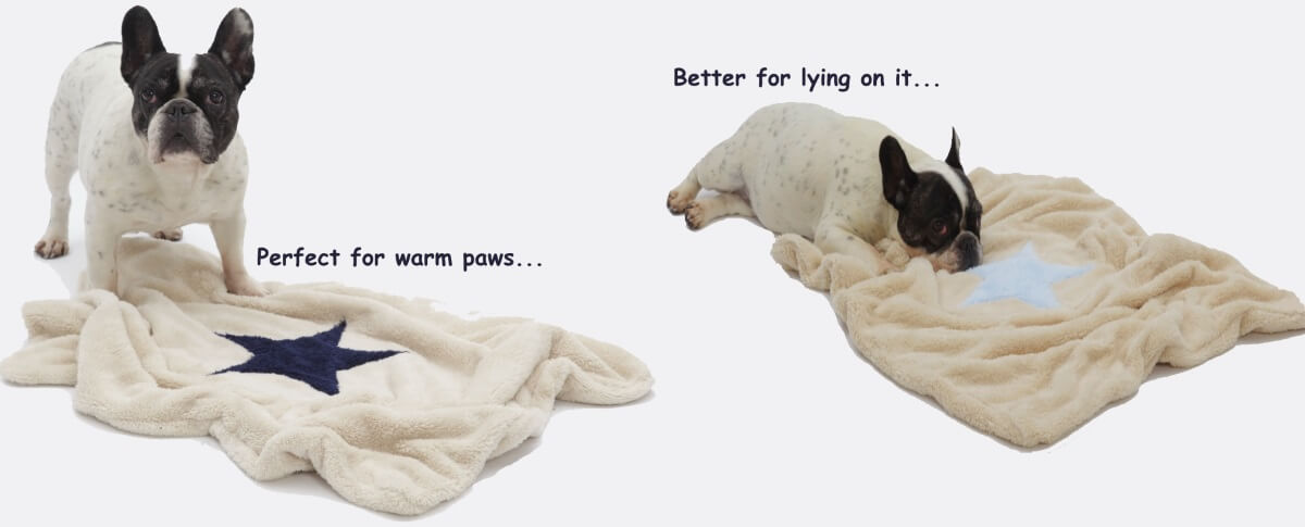 Perfect for warm paws….but better for lying on it... | DOGS in the CITY