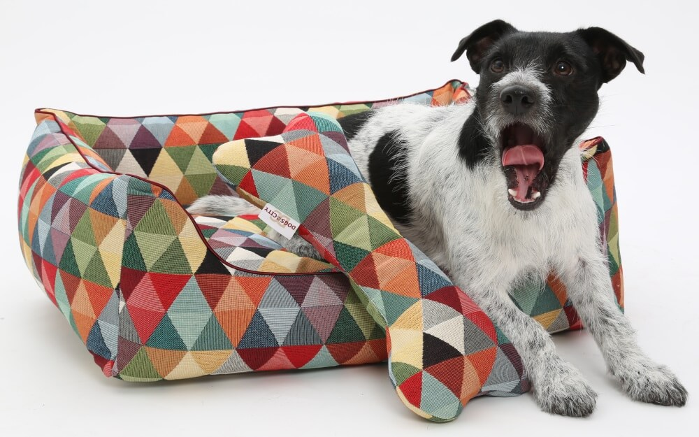 My new good mood bed...as funny as I am :-) | DOGS in the CITY