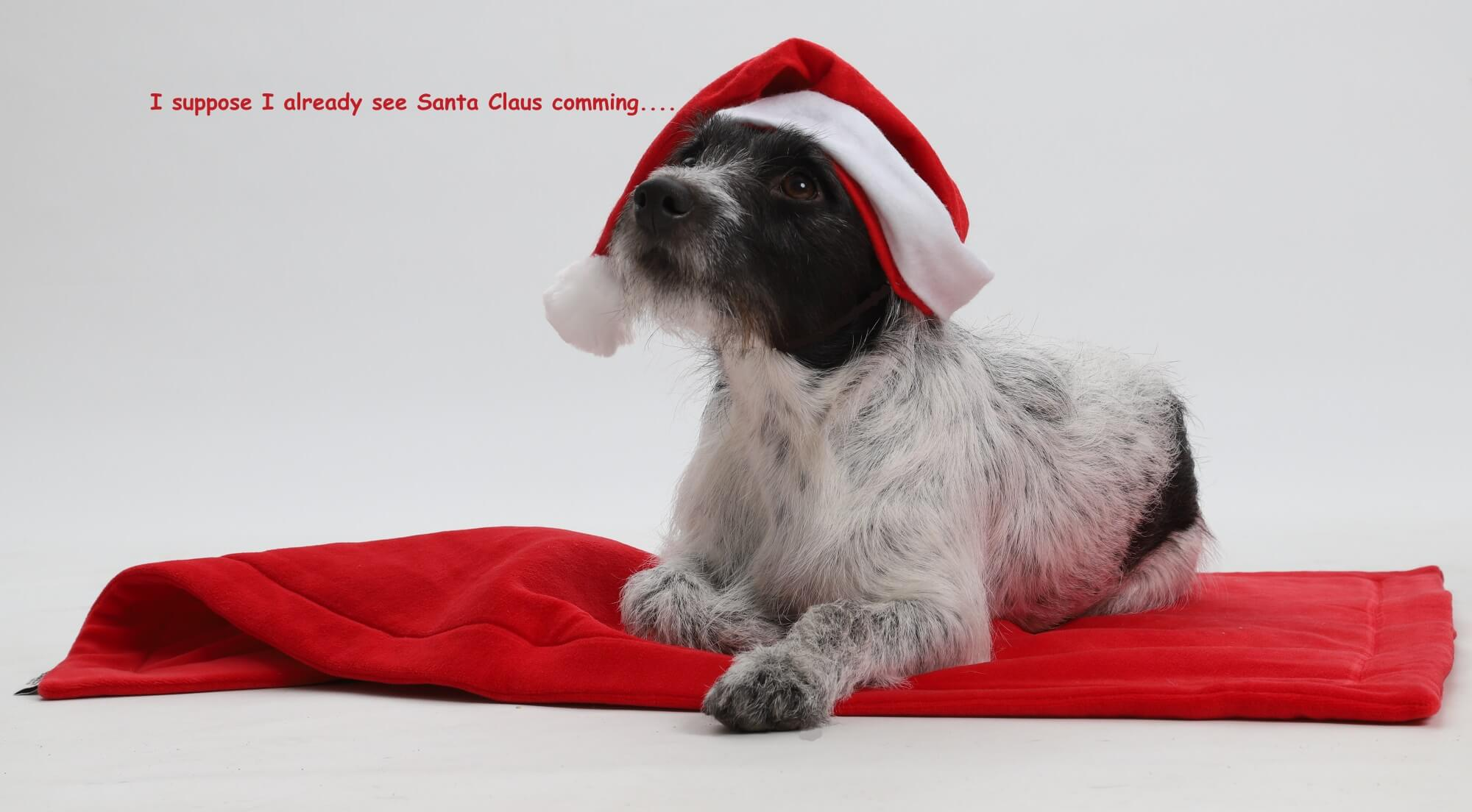 I suppose I already see Santa Claus coming... | DOGS in the CITY