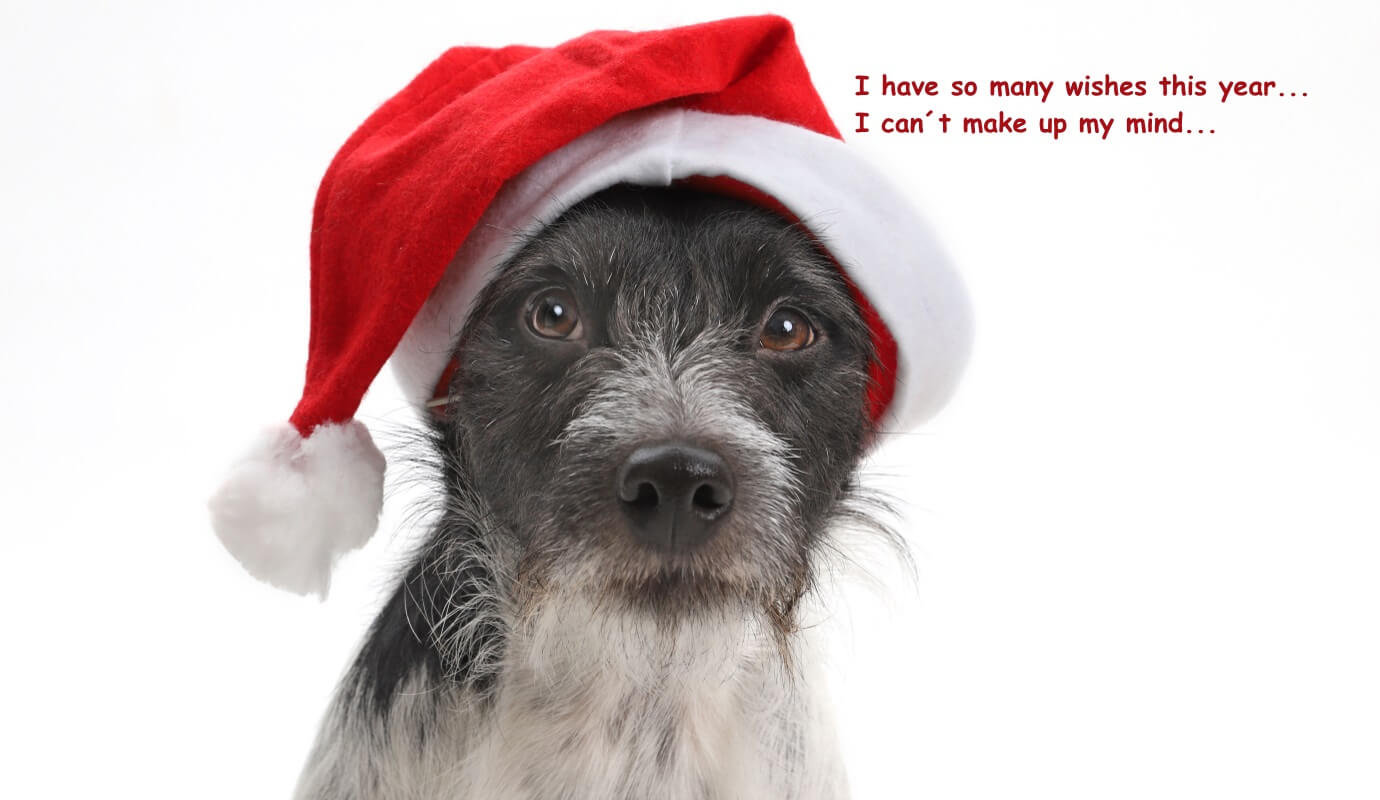 SO MANY WISHES TO SANTA... | DOGS in the CITY