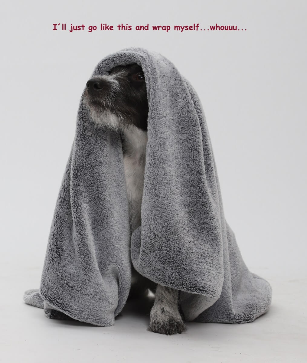 I´ll just go like this and wrap myself….whoouuu... | DOGS in the CITY