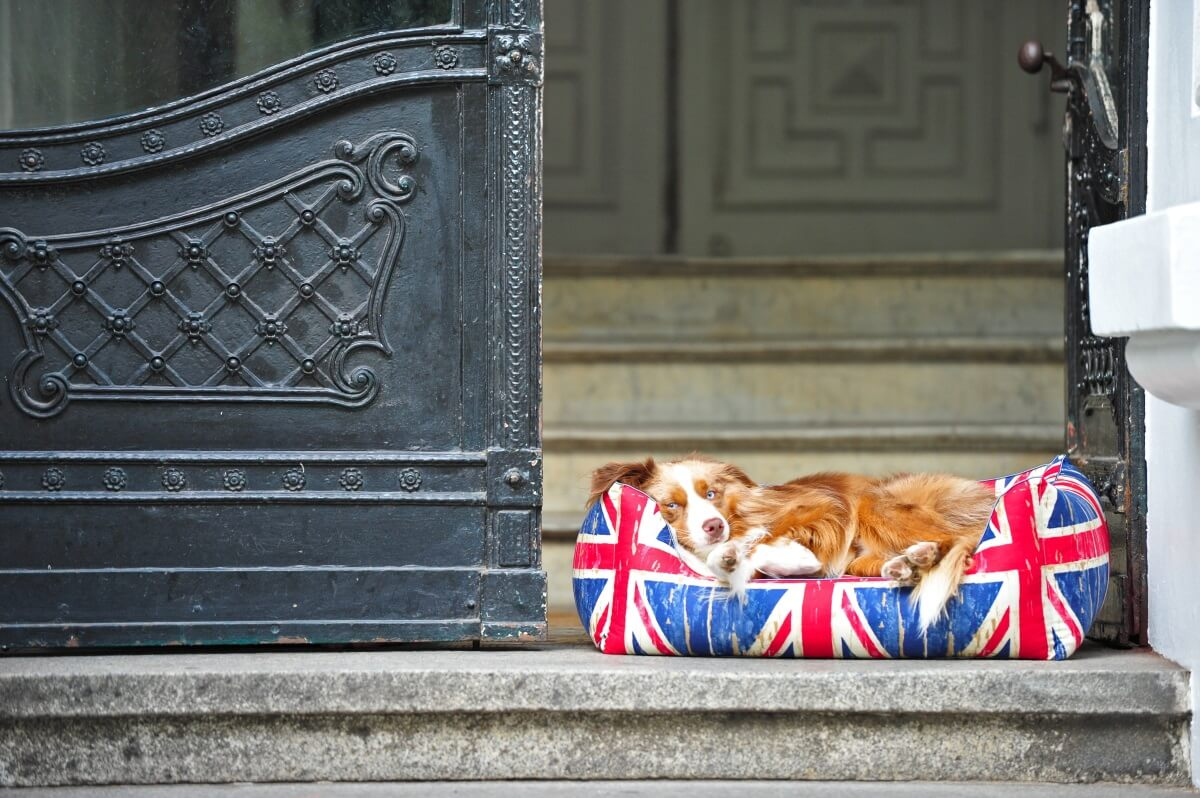 I don't take care of the Brexit... tttzzzzz.... | DOGS in the CITY