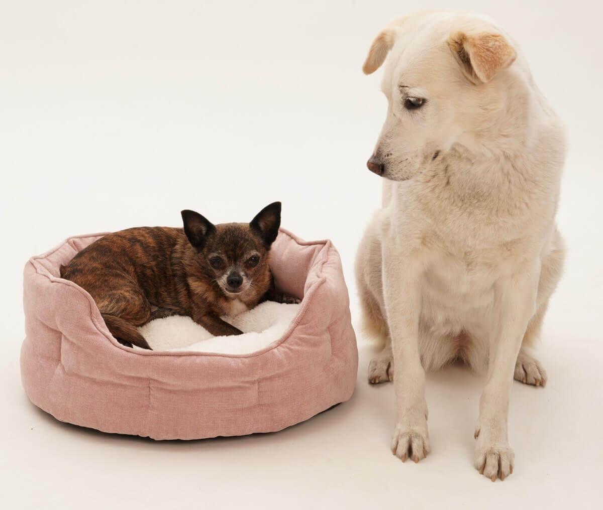 hundek rbchen f r kleine hunde welpen dogs in the city blog. Black Bedroom Furniture Sets. Home Design Ideas