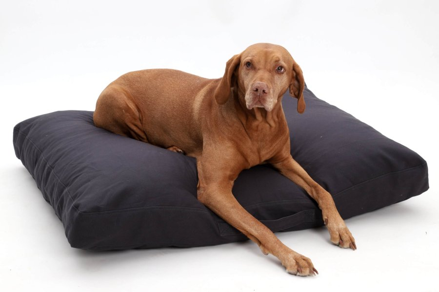 Dog Bed cushion Hamptons cotton canvas graphite anthracite