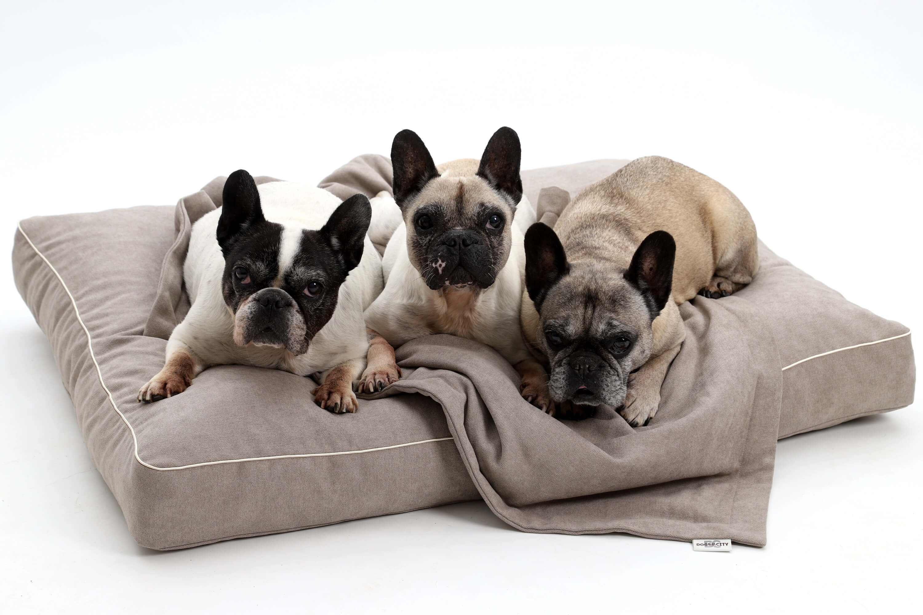 Dog Bed Cushion Monterey Sand Beige Dogs In The City