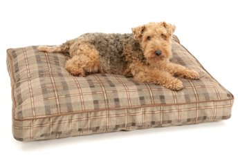 Dog Bed cushion Chester chestnut brown