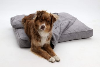 Dog Bed cushion Monterey grey
