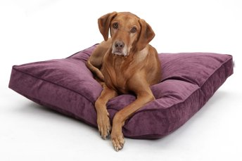 Dog Bed Cushion Mystic velvet purple