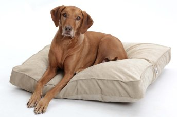 Dog Bed Cushion Mystic velvet sand beige